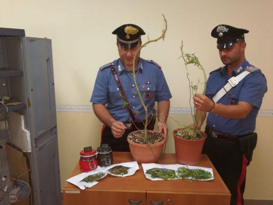 Pomezia marijuana nascosta in camera da letto due arresti l 39 eco del litorale notizie online - Telecamera nascosta camera da letto ...